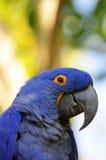 Close-up portrait of a smiling parrot Stock Image