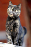Close up portrait tabby kitten cat against red natural backgroun Royalty Free Stock Photography