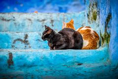 Close- up portrait of two calico cats, sitting outside on the blue stairs of house, with one cat looking at sideways. Close- up portrait of two calico cats stock photo