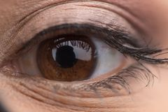 Close up portrait of woman brown eye. Stock Photography