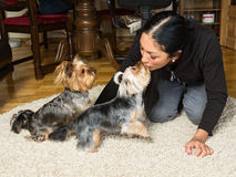 Close up  portrait of a woman - yorkshire terrier breeder kissin Royalty Free Stock Photo