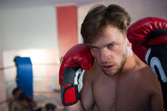 Close-up portrait of young male boxer wearing red gloves royalty free stock images