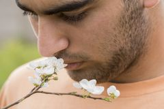 Close up portrait of a young man enjoying from spring time plum. Tree buds odor royalty free stock photos