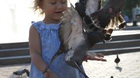 Close-up portreit van duiven van weinig de leuke meisjes voedende straat in het park stock video