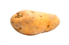 Close Up of potato Stock Photography