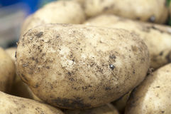 Close up of potato Royalty Free Stock Photo
