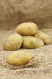 Close up of Potatoes Royalty Free Stock Photography