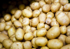 Close-up of potatoes in supermarket Royalty Free Stock Photos