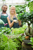 Close-up of potted plants against gardeners at greenhouse Royalty Free Stock Photo