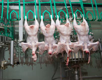 Close up of poultry processing Stock Photo