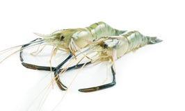 Close up prawn or raw shrimp isolated Royalty Free Stock Photo