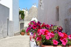 Flowers in Alberobello, Italy royalty free stock images