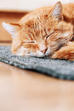 Close up of pretty Red Cat Curled Up and Sleeping in His Bed Royalty Free Stock Images