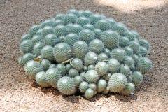 Close-up of a prickly cactus Stock Photos