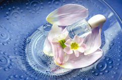 Close up of primrose flowers and petals floating in bowl of water with bottle of perfume. Spa theme Stock Photography