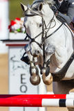 Close up principal de salto dos pés do cavalo Foto de Stock Royalty Free