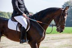 Close up principal do tiro de um cavalo do adestramento durante o evento da competição Cor, cavaleiro imagens de stock royalty free