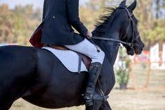 Close up principal do tiro de um cavalo do adestramento durante o evento da competição Cor, cavaleiro imagens de stock