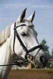 Close up principal do tiro de um cavalo novo no evento de salto da mostra Fotografia de Stock