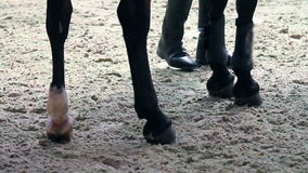 Close up of a professional horse hooves while training stock video