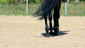 Close up on professional horse hoves on outside training ranch stock video footage