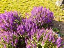 Close-up prudente da flor em um parque Fotos de Stock