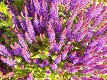 Close-up prudente da flor em um parque Imagem de Stock Royalty Free