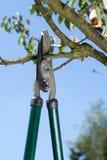 Close-up of pruning Stock Photos