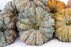 Close up pumpkin fresh is asian type Stock Photo
