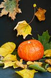 Close-up of pumpkin on leaves on dark background, space for text royalty free stock image