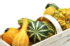 Close-up pumpkins in the basket Royalty Free Stock Images