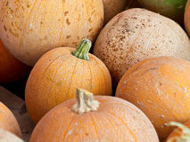 Close-up of pumpkins after harvest Stock Images
