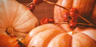 Close up of pumpkins and plant stems. On table Royalty Free Stock Image