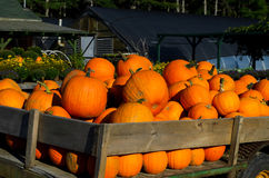 Close up Pumpkins in wagon Royalty Free Stock Image