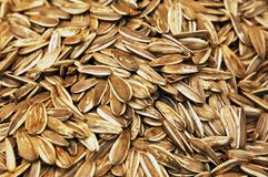 Close up of punpkin seeds Stock Photo