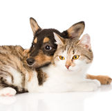 Close-up puppy embracing cat. isolated on white background Stock Image