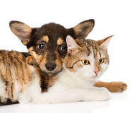 Close-up puppy hugging cat.  on white background Royalty Free Stock Photo