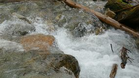 Close up puro do fluxo do rio da montanha rápida vídeos de arquivo