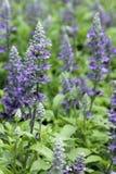 Close-up purpere bloemen Royalty-vrije Stock Afbeeldingen