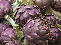Close up of purple artichokes Royalty Free Stock Image