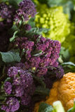 Close up on purple broccoli Royalty Free Stock Images