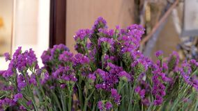 Close-up of purple color statice flower. Flowers for sale in a shop for decoration and congratulation.