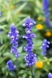 Close up of Purple Flower Stock Photos