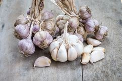 Close up of purple garlic. Stock Images