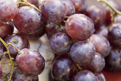 Close Up of Purple Grapes. On stem laying on a table Stock Images