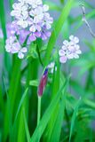 Close up, of a purple iris and delicate wildflower blooms royalty free stock image