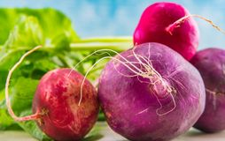 Close Up of Purple and Red Radishes. On their sides Stock Photography