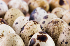 Close up of quail eggs Stock Image