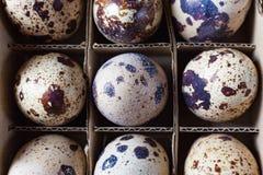 Quail eggs in a paper box. Close up of quail eggs in paper box Stock Photos