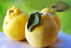Close-up of quince Royalty Free Stock Photography